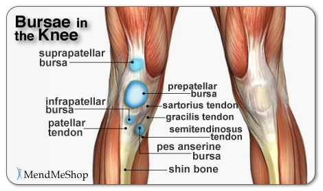 Bursae in the Knee and Bursa Pain