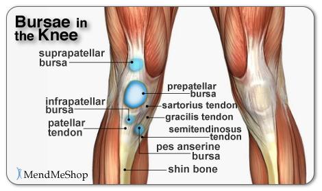 Bursae in the Knee and Bursa Pain