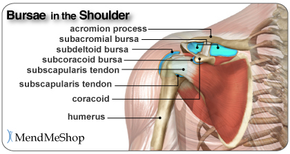 Subdeltoid, subacromial, subscapularis and subcoracoid bursae in the shoulder